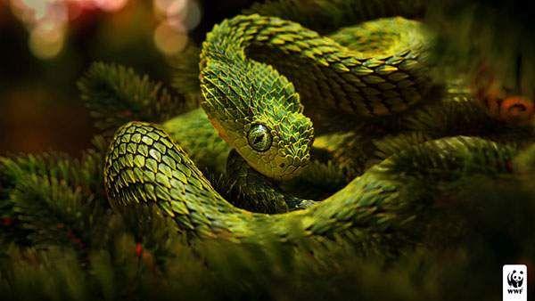 尖った鱗を持つグリーンの蛇を撮影したかっこいい写真壁紙画像