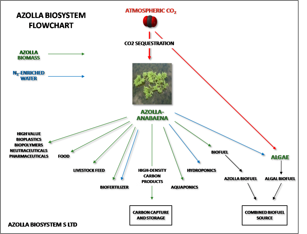 Azolla Flow Chart Greenhouse Hydroponics Aquaponics Ideas