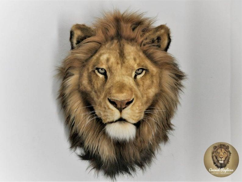 23+ Taxidermy lion info