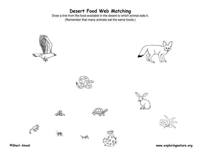 Worksheet Food Webs For Kindergarten Students heres a page for constructing desert food web chains web