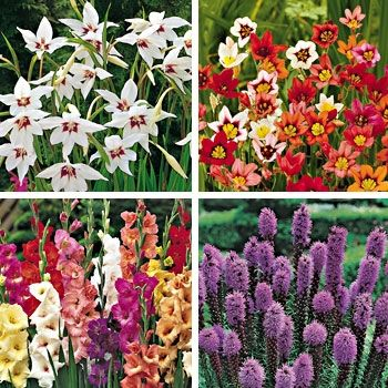 Summer Bulb Garden The summer garden collection offers an ...