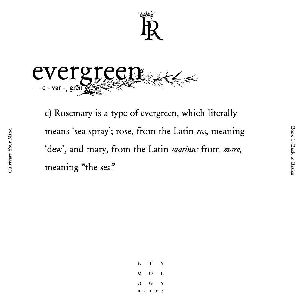 Rosemary Words Matter Evergreen Sea Spray