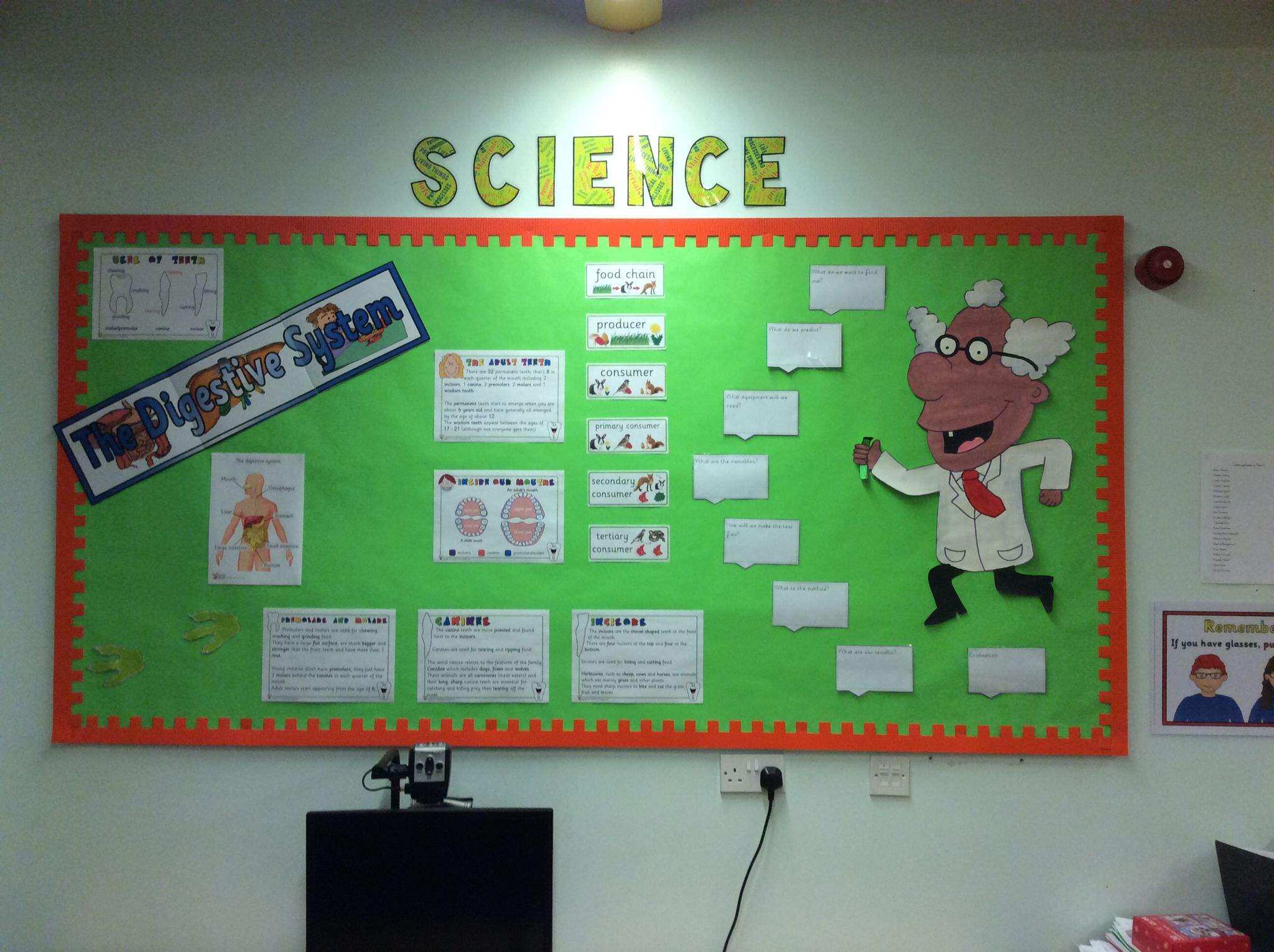 Classroom Display Ideas Year 4 ~ Year science display the digestive system teeth and