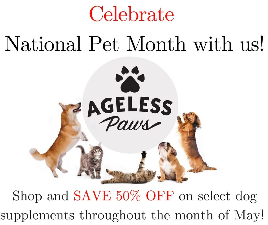 May is National Pet Month, and to celebrate, we're