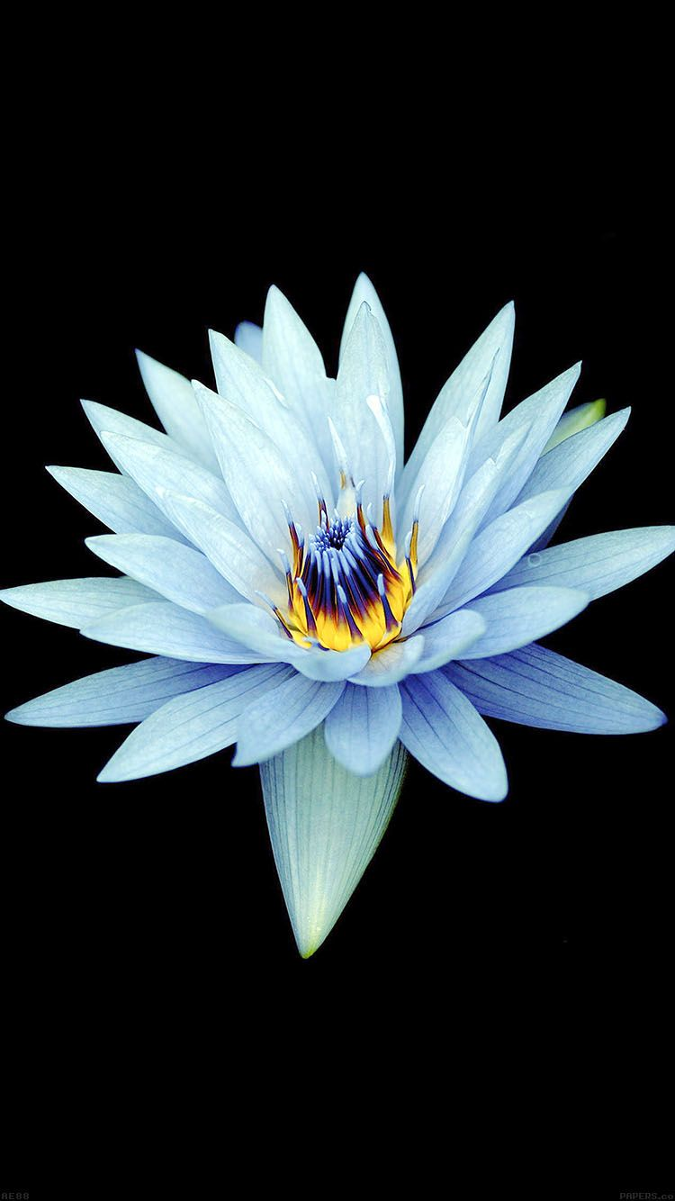 Iphone X Wallpaper Hd 1080p Flower Dark Flowers