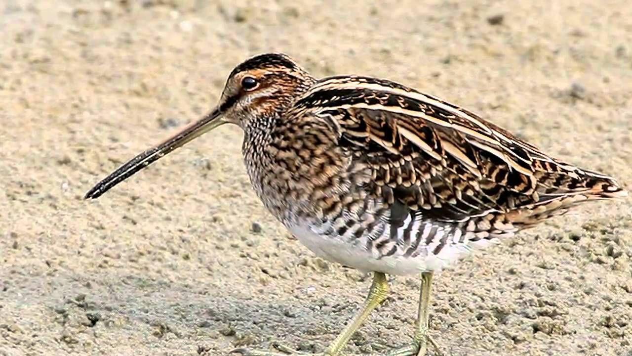 пожалуйста поподробнее фото дикой птицы с длинным клювом аблязин завоевал серебряную