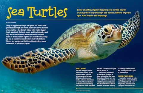 Green Sea Turtle | Shape, A smile and Smile on