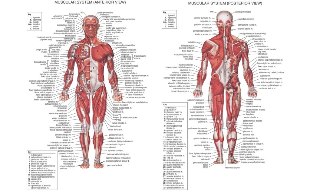 Anatomy Hd Wallpapers Backgrounds Wallpaper 1440900 Anatomy