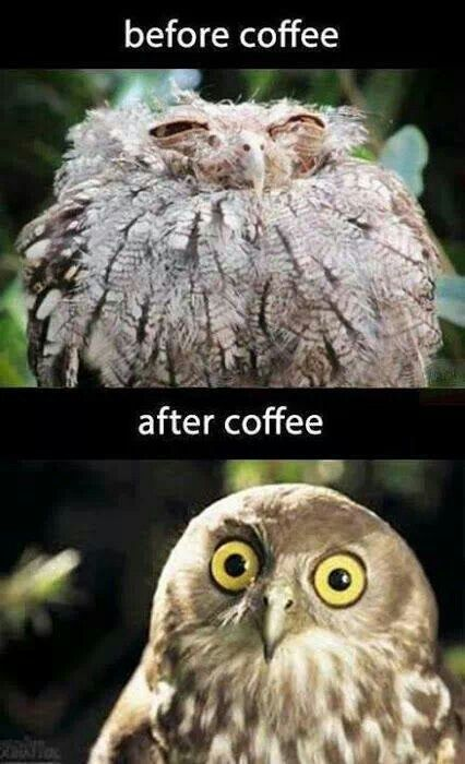 Owl see what happens after coffee! www.SlenderSuzie.com