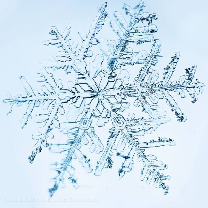 A Snowflake's Life: How Snowflakes Get Their Shape