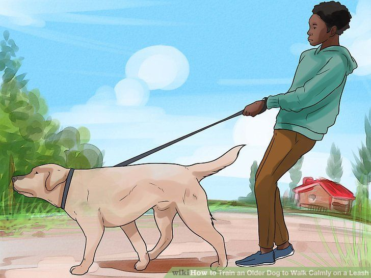 How To Train A Grown Dog To Walk On A Leash In 2020 Dog Leash