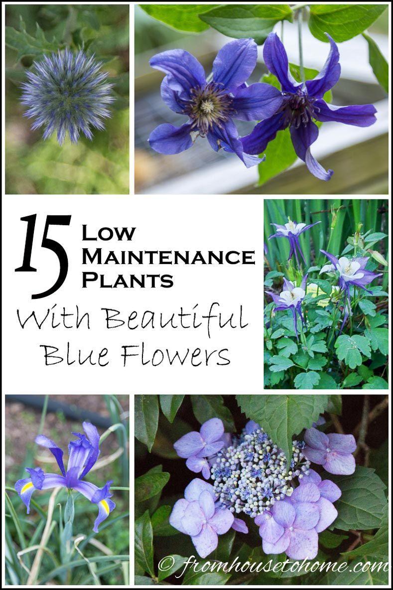 15 Low Maintenance Plants With Beautiful Blue Flowers Love Blue