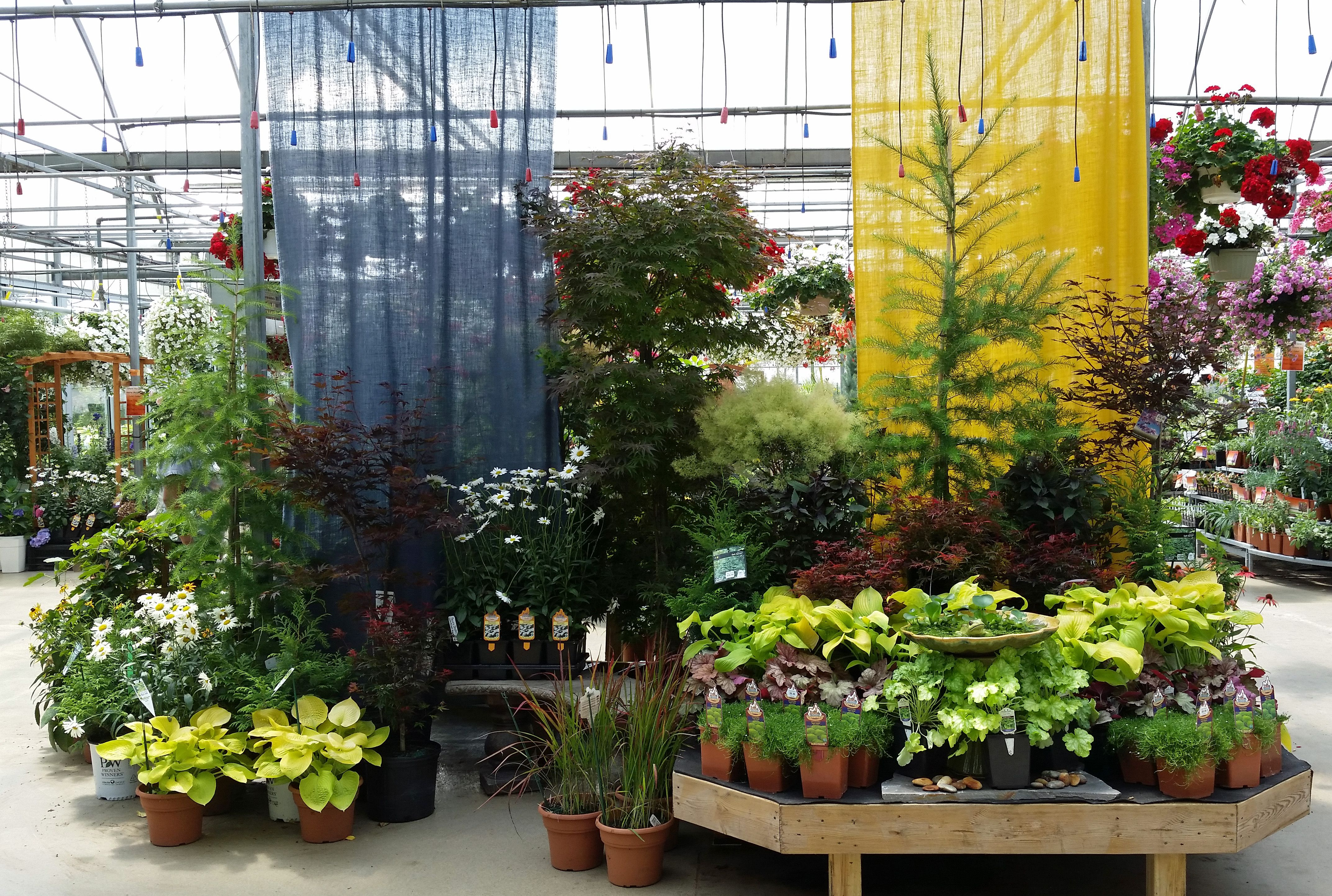 Award Winning Perennial Display Sipkens Nurseries Garden Images