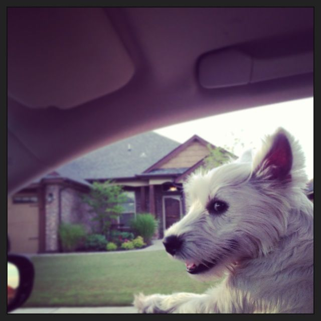 Indie riding in the car.
