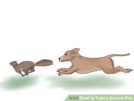 Train A Squirrel Dog Squirrel Hunting Dog Training Squirrel