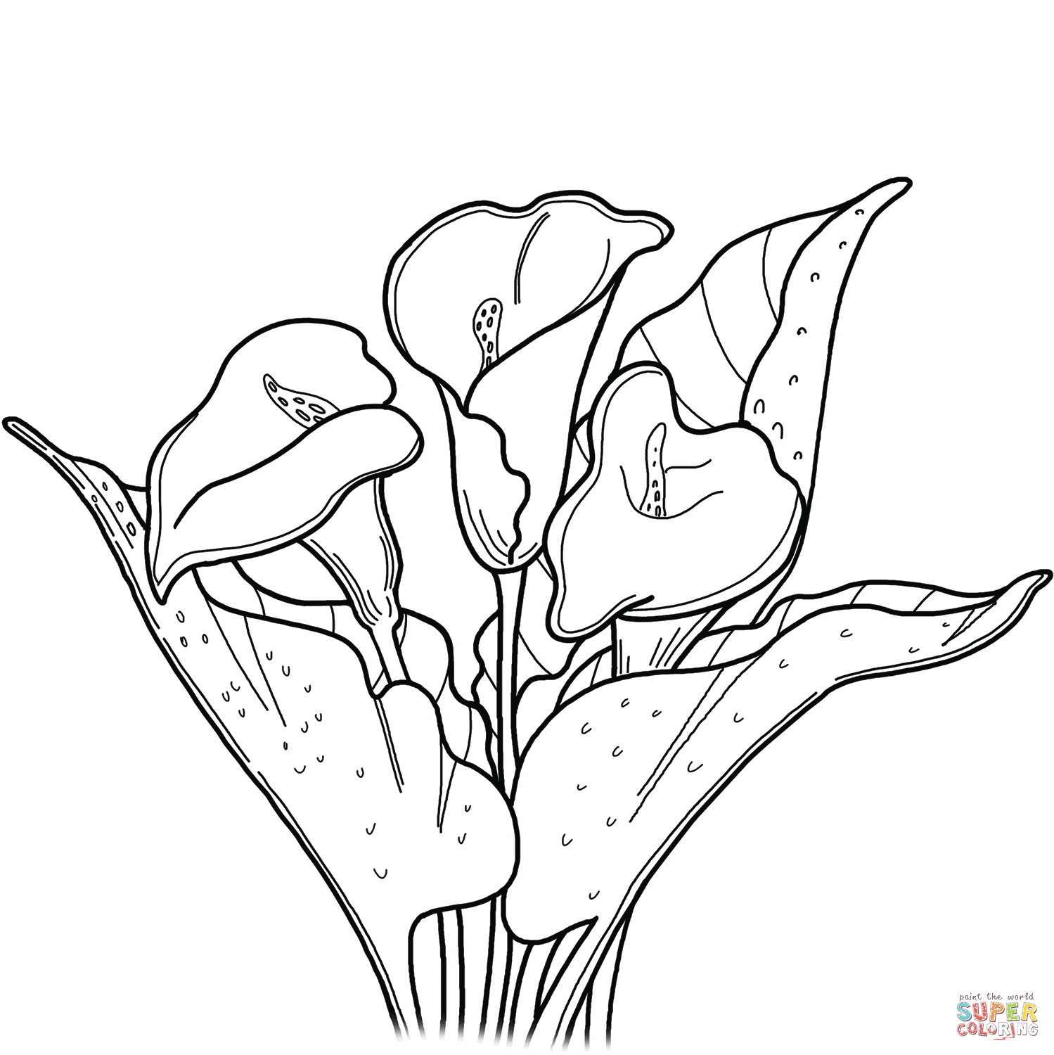 Calla Lily coloring page Free Printable Coloring Pages