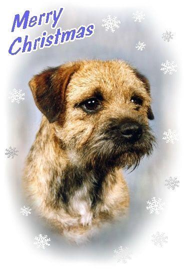 Border Terrier Dog A6 Christmas Card Design Xbordter 10 By Paws2print Border Terrier Terrier Terrier Dogs