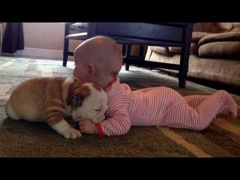 Nothing Is Sweeter Than This Video Of A Bulldog Puppy Kissing A