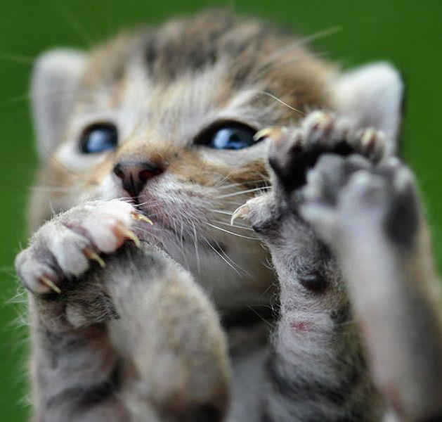 Pin by あゆみかん on にゃんこ | Cute cats, Cats, Cute animals