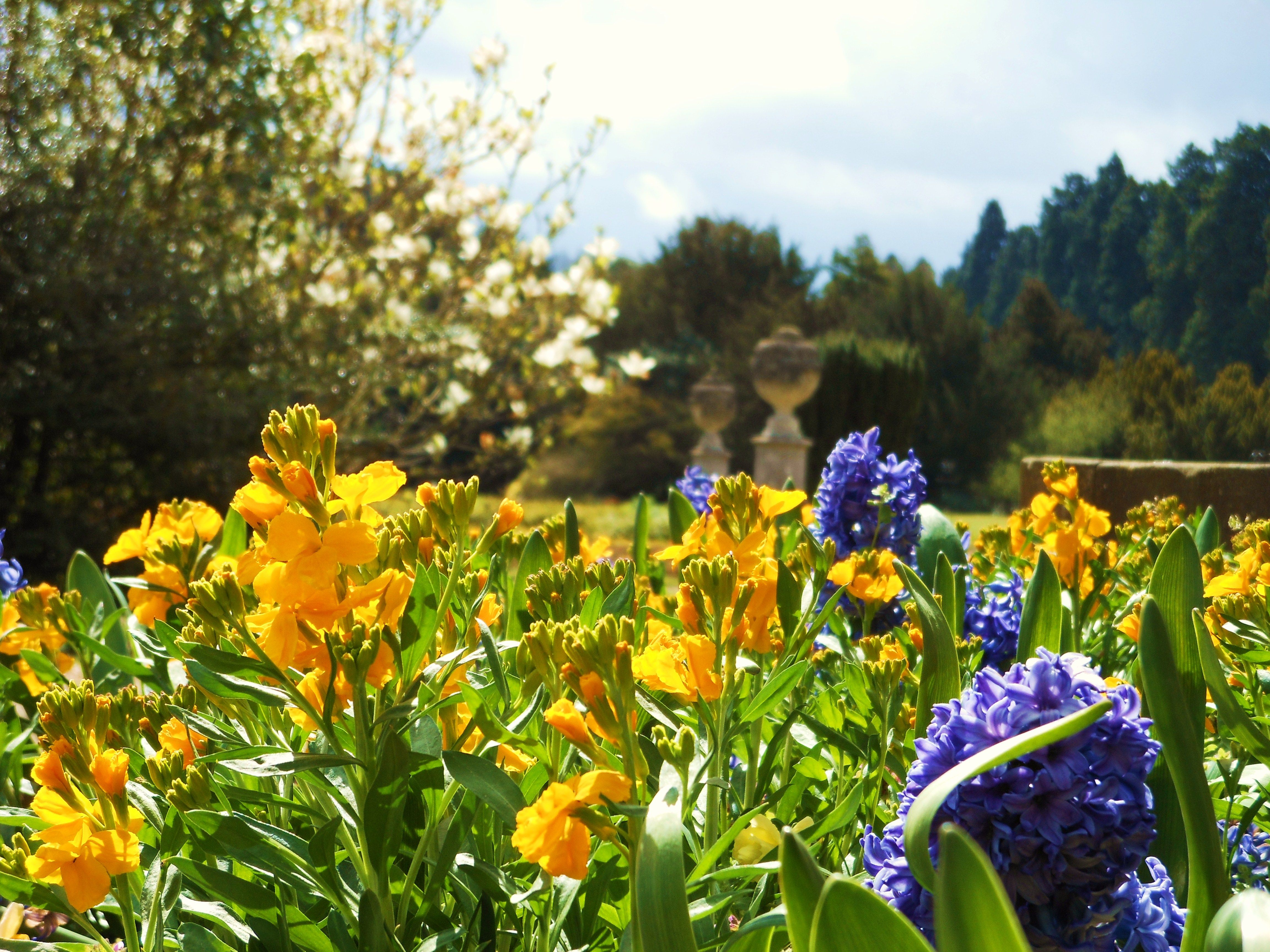 Spring flowers at Ashridge House from the Library