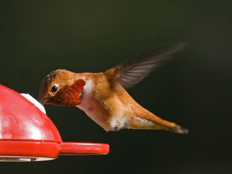 Pacific Northwest Birds Identification | In the backyard ...