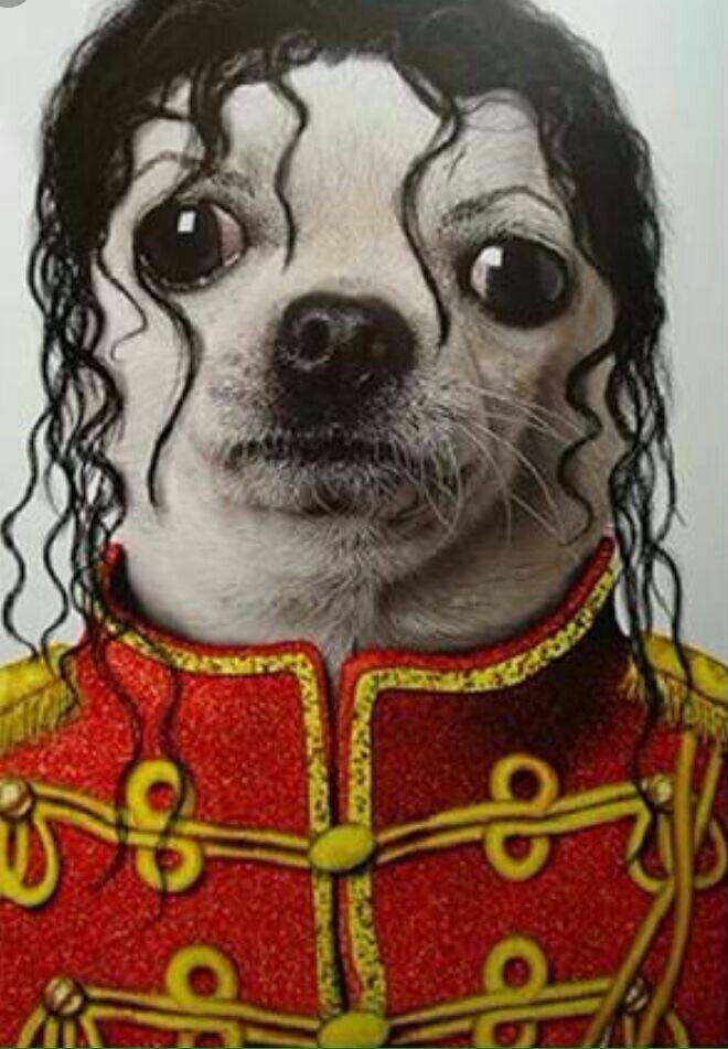 *PROMOÇÃO* Show do Michael Jackson com 80% de desconto no ingresso. Apenas R$ 100...Os invejosos vão dizer que ele já morreu.