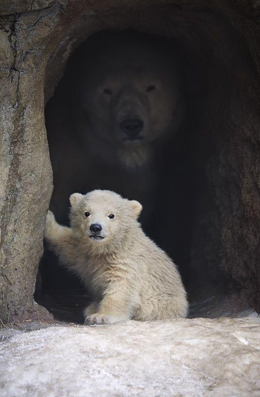 Pin On Zoo Babies