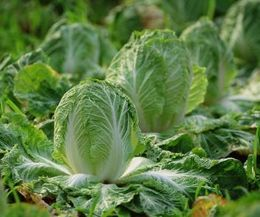 The Best Vegetables To Grow In Ohio With Images Fall Garden
