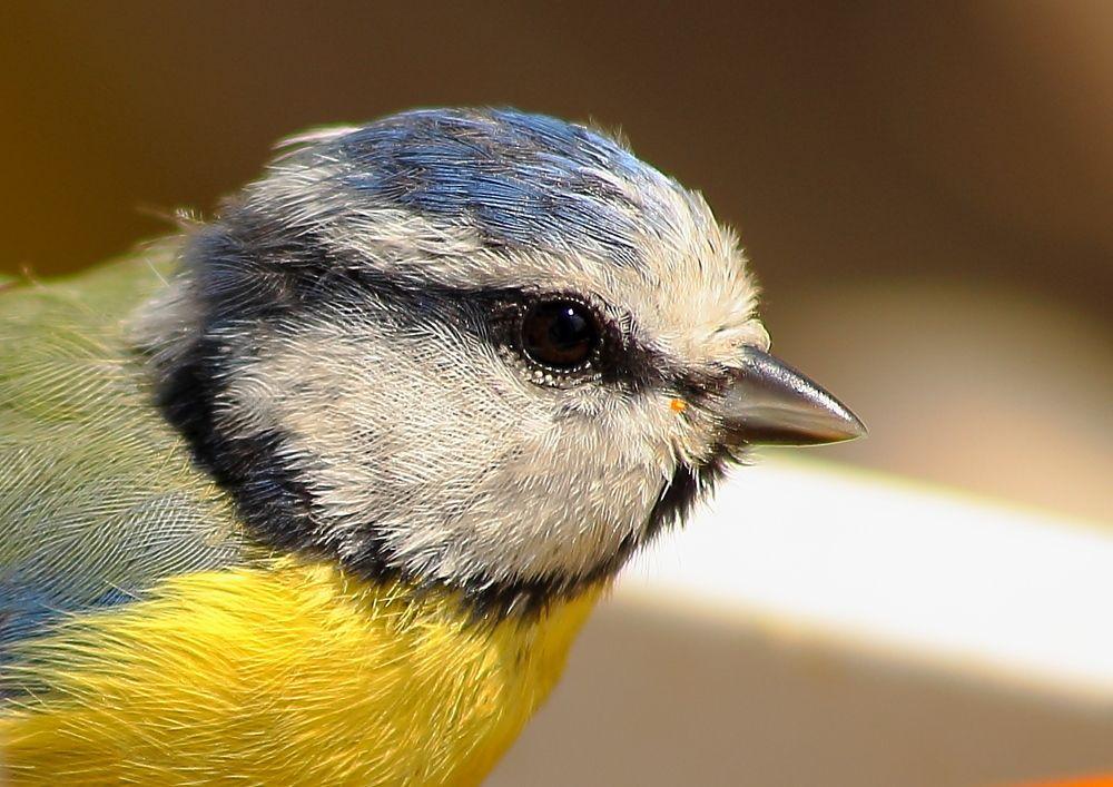 zoogdieren en vogels