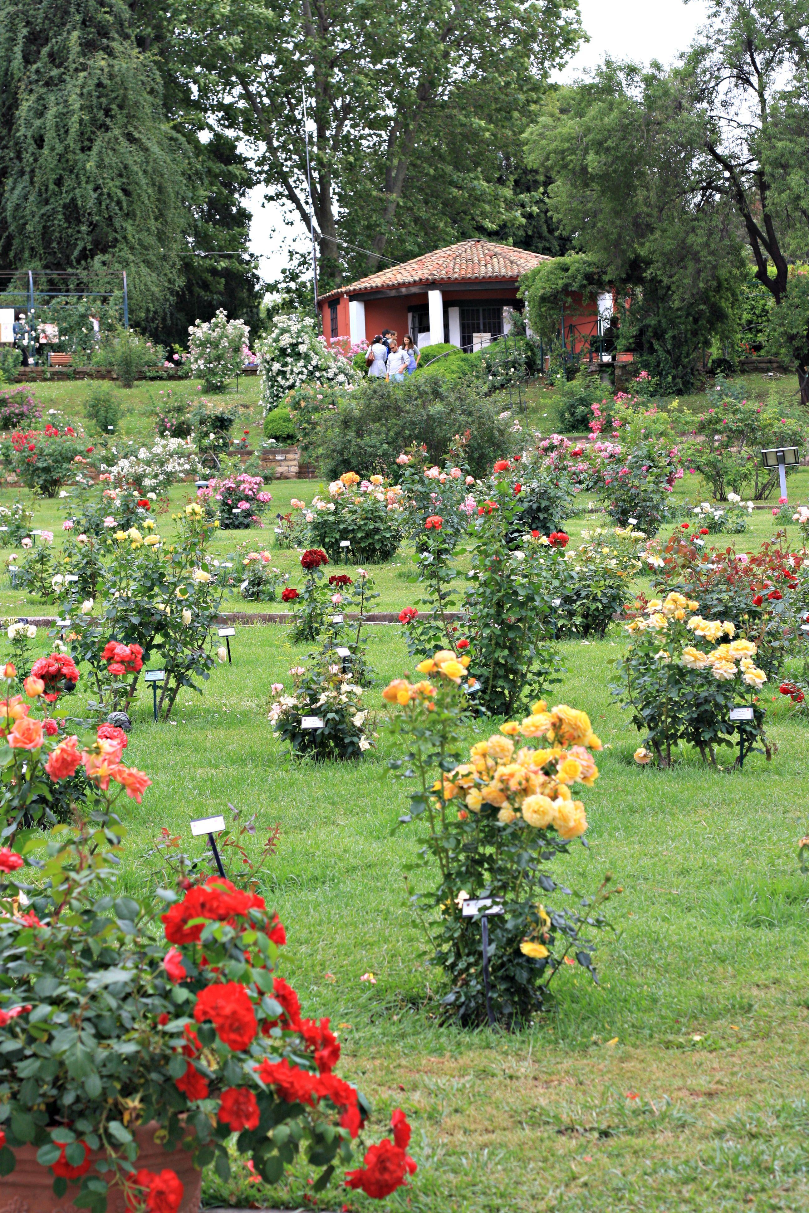 Prin gaura cheii …. Beautiful gardens, Rose garden