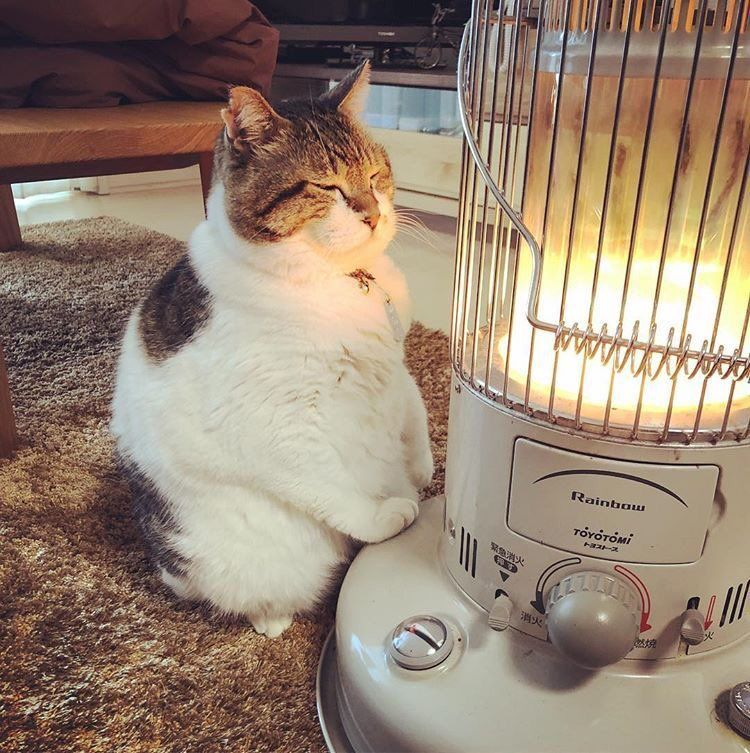 Tirol Craft 比叡 造船中 On 2020 画像あり 子猫 かわいいペット おもしろい猫