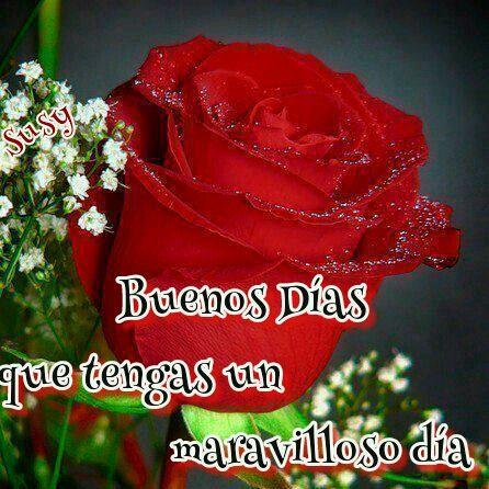 Buenas Noches Con Bellas Rosas Imagenes Buenos Dias Buenas Tardes
