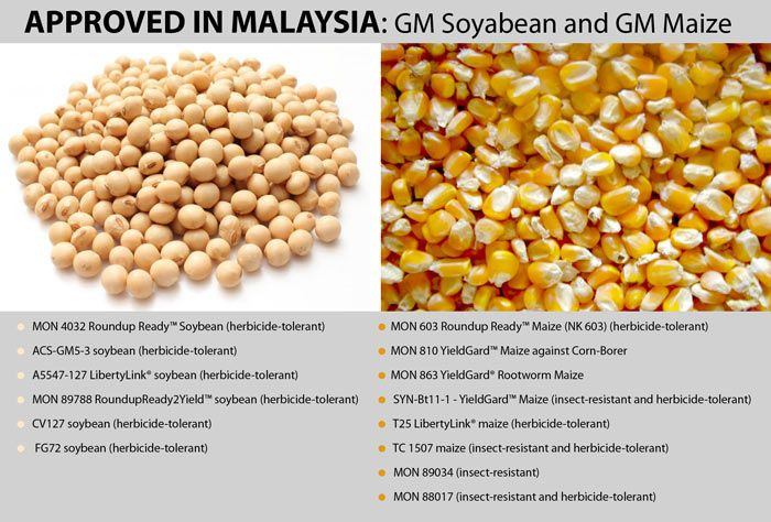 The Silent Threat Gm Food In Malaysia Genetically Modified Food