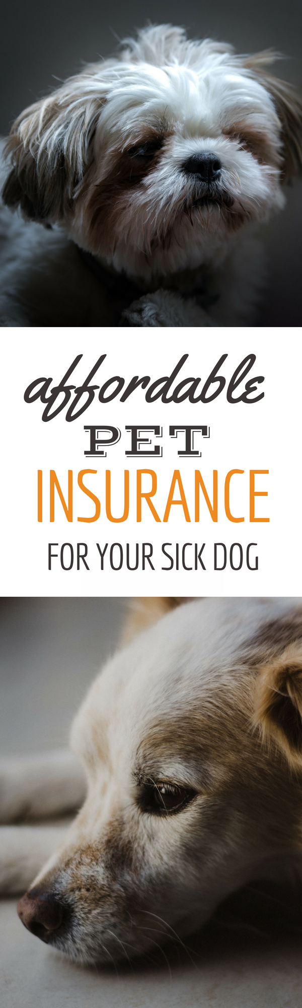 AKC Pet Insurance & PetPartners Review Best Coverage At A