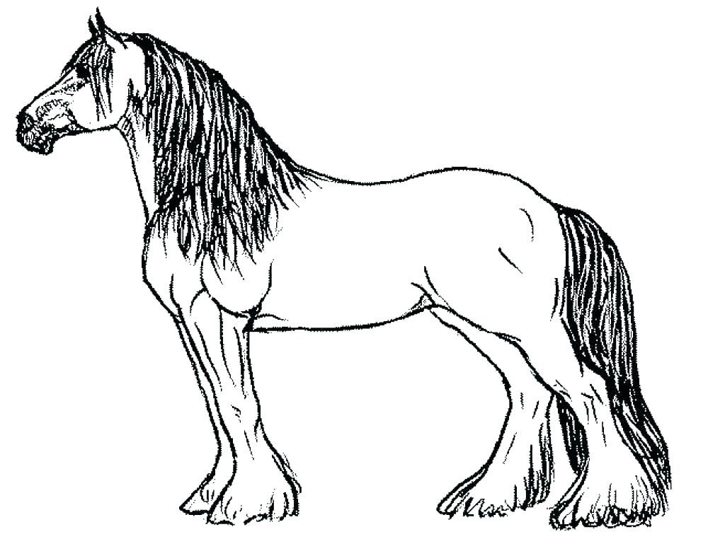 Grown ups coloring pages of realistic Horse Animal