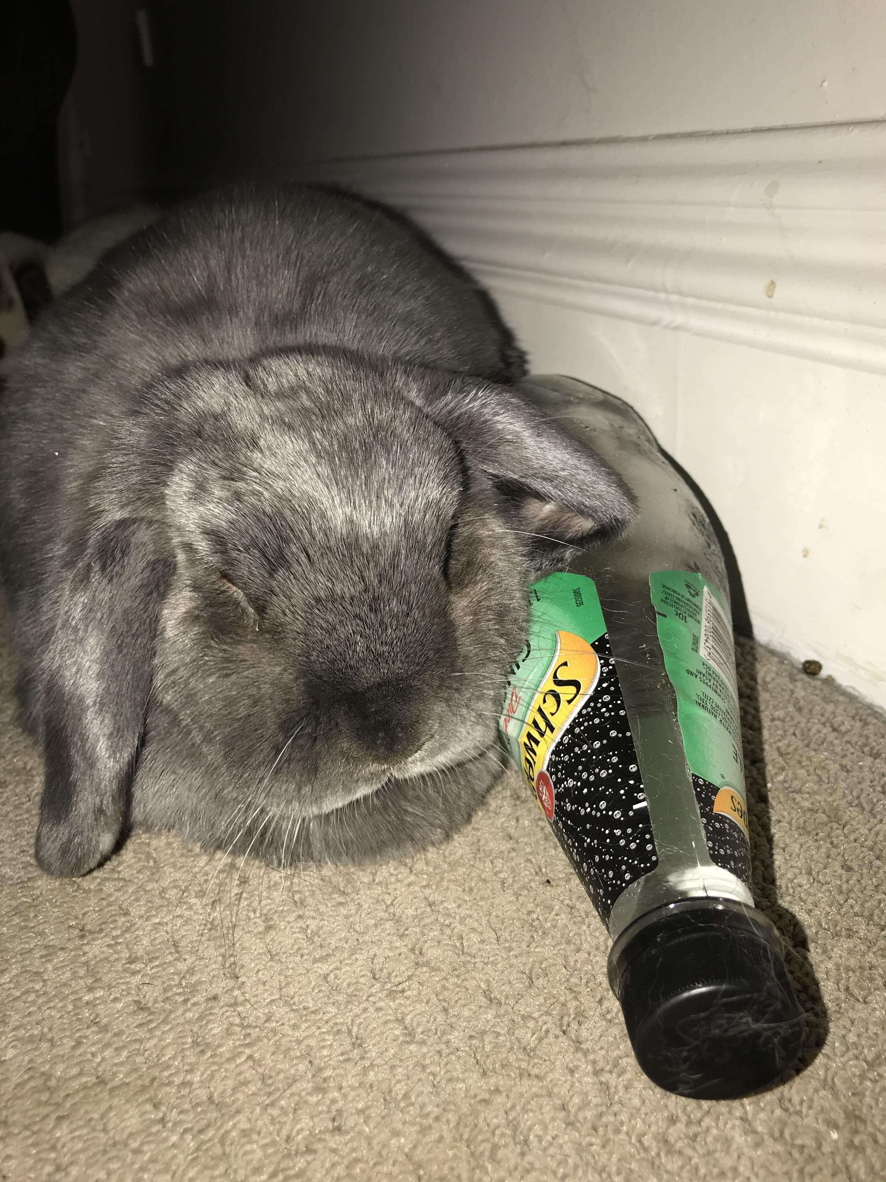 Pin On Bunny