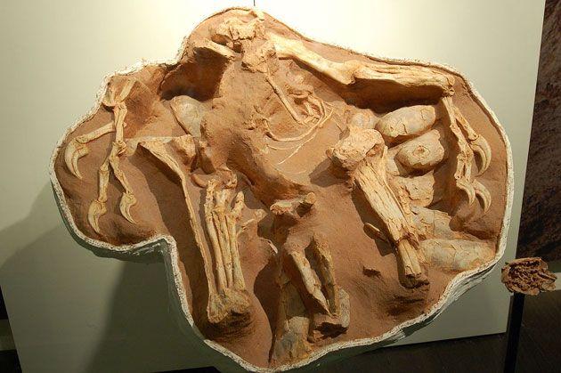 Forscher finden 75 Millionen Jahre alte erhaltene Dino-Hornhaut und Proteine . . . http://www.grenzwissenschaft-aktuell.de/75mio-jahre-alte-dino-hornhaut-proteine20161109