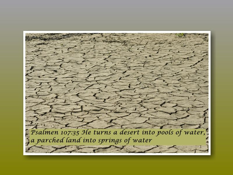 Psalm 107:35 He turns a desert into pools of water, a parched land into springs of water