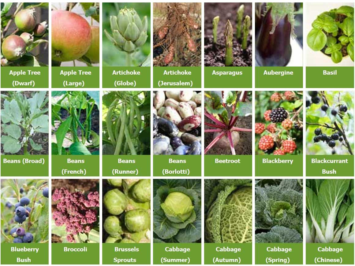 377 best how to start a garden images on pinterest garden