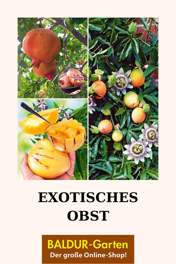 Exotisches Obst 1a Qualitat Kaufen Baldur Garten Exotisches Obst Obst Exotische