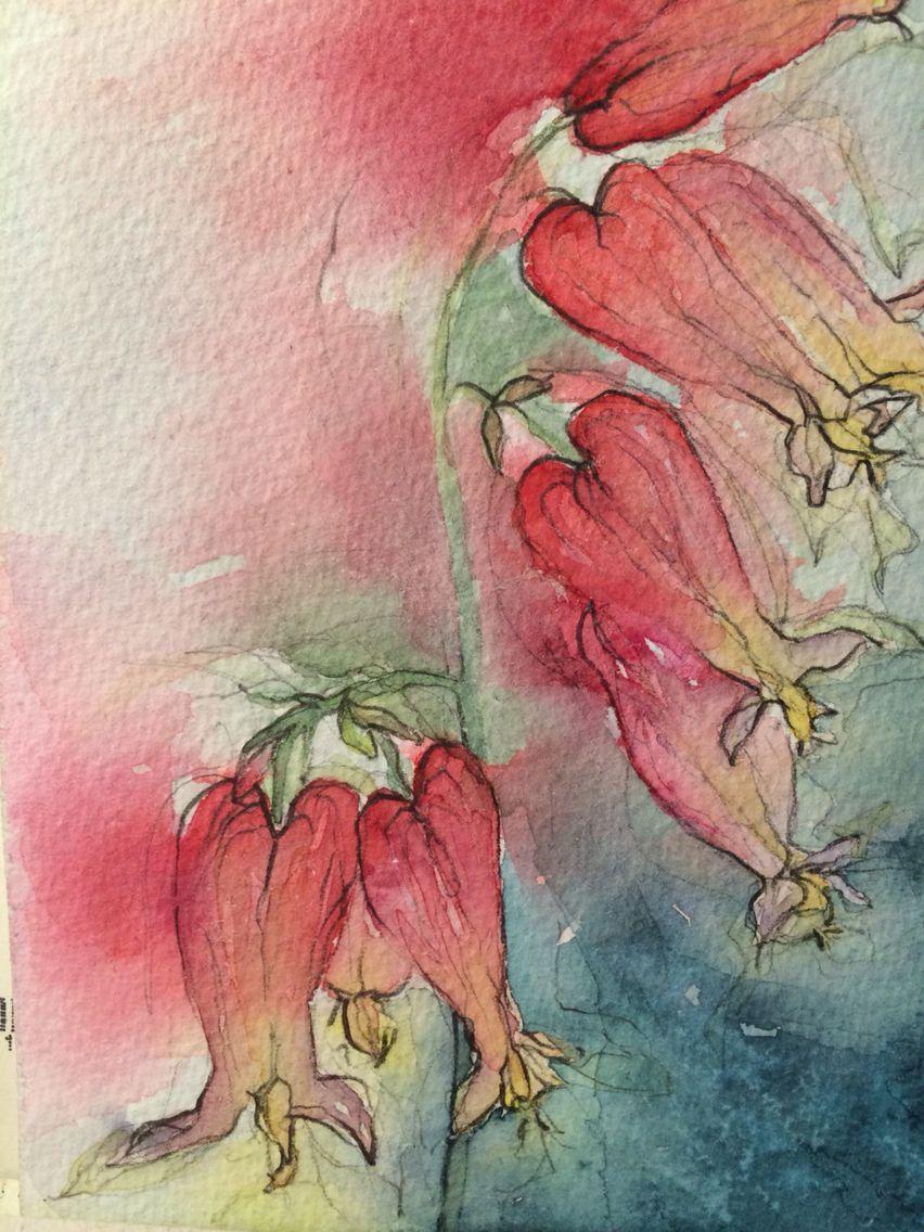Watercolour, Love-lies-bleeding | My watercolour, pencil and ...