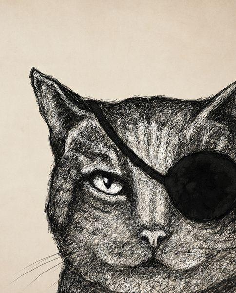 gato pirata, ilustración de Tracie Andrews