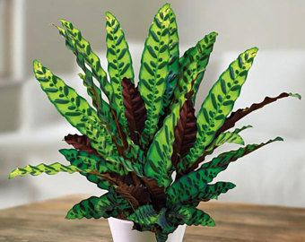 11 Easy To Grow Houseplants Houseplant Plants and Houseplants