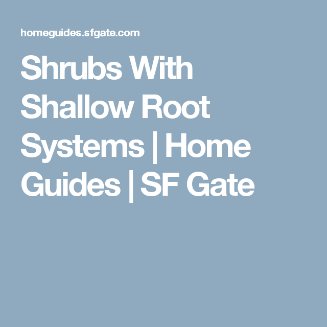 Shrubs With Shallow Root Systems My Garden