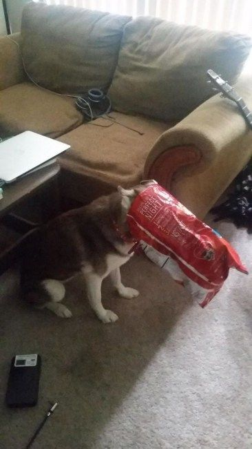 28 times animals were little jerks and got caught red handed cats 3 pinterest animal cat and dog