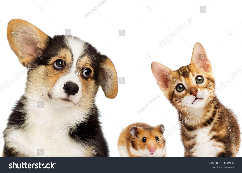 Kitten And Puppy And Hamsterkitten Puppy Hamster Kittens And Puppies Kitten Puppies
