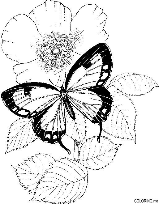 Butterfly With Flowers Coloring Pages With Images Butterfly