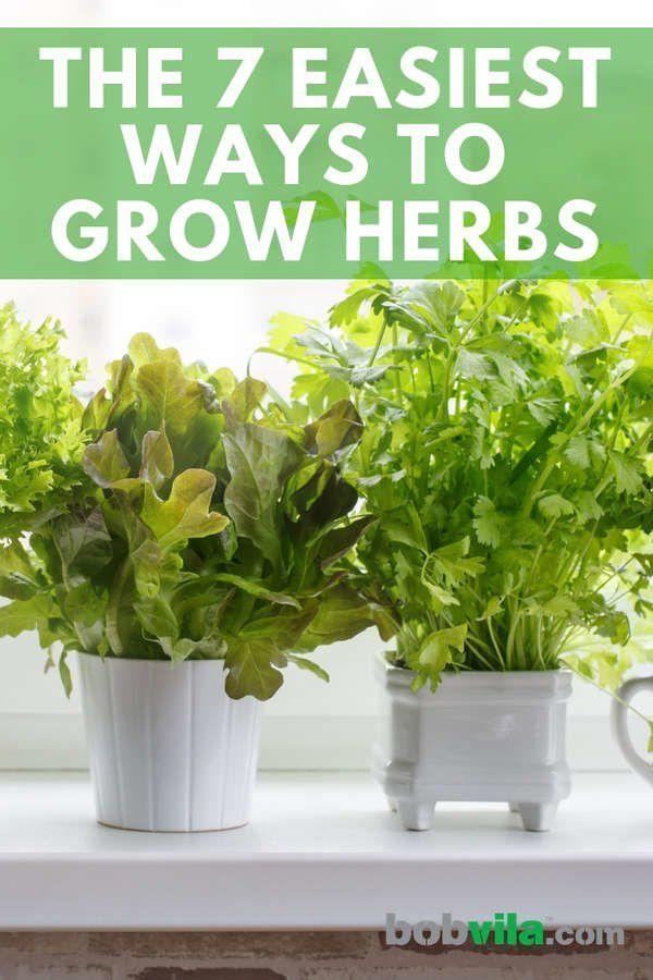 The 7 Easiest Ways To Grow Herbs Herbs Indoors Growing 400 x 300