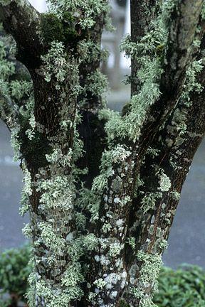 lichen fungi algae relationship advice