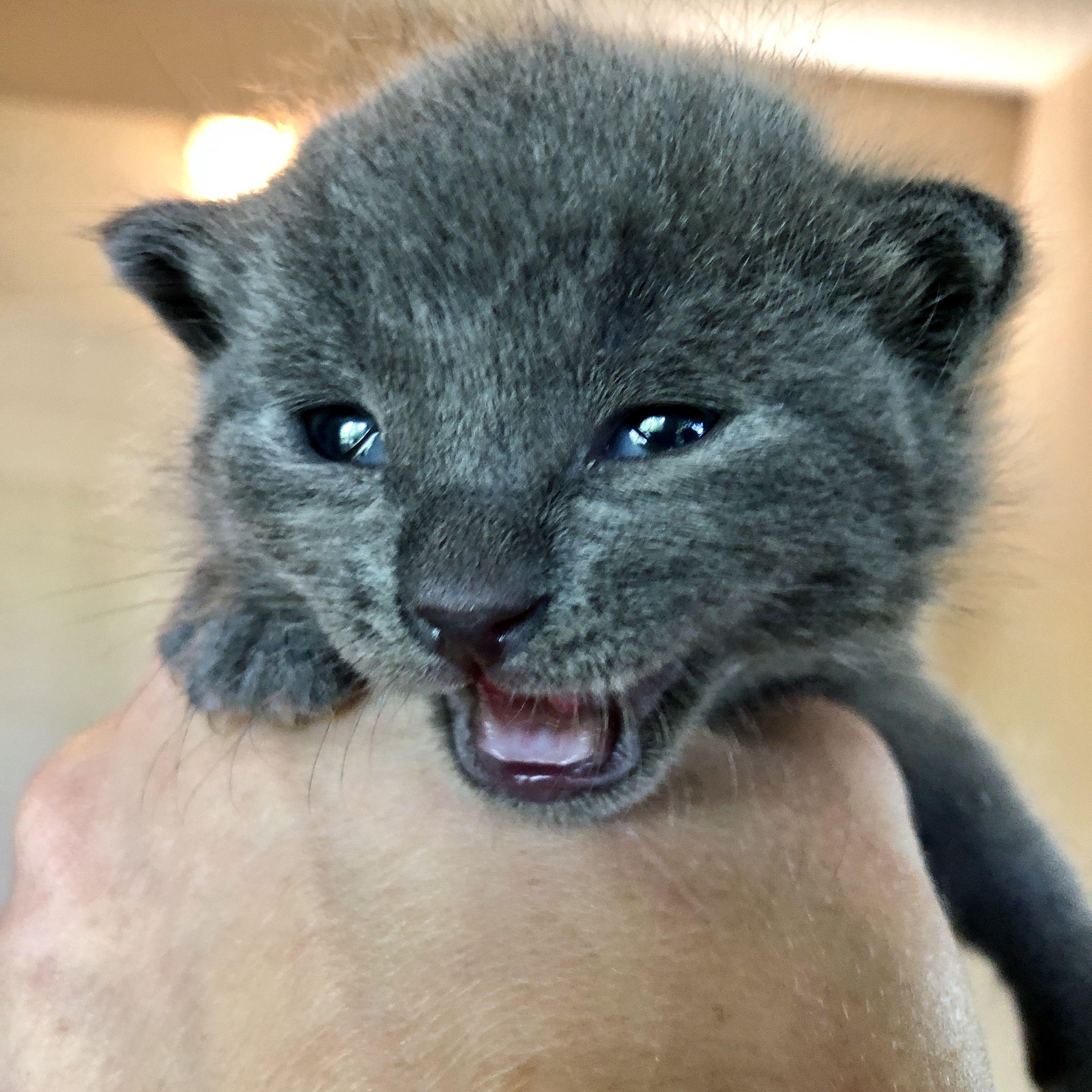 TinyKittens Society rescue kitten TV Kitten rescue